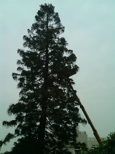 Tree Before Removed